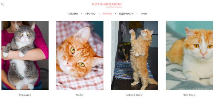 Не покупай, возьми из приюта: где в Киеве выбрать питомца